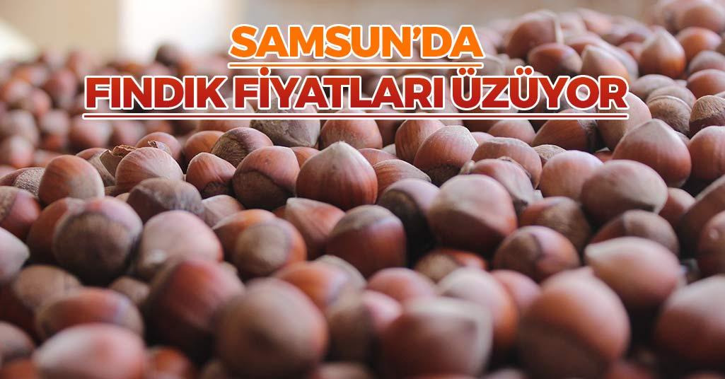 Samsun'da Fındık Fiyatları Üzüyor