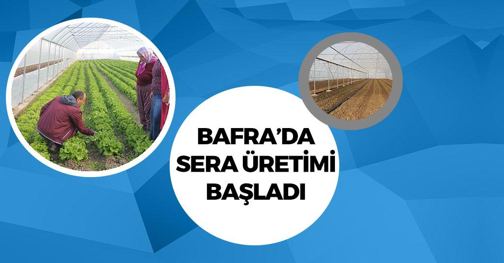 Bafra'da Sera Üretimi Başlıyor