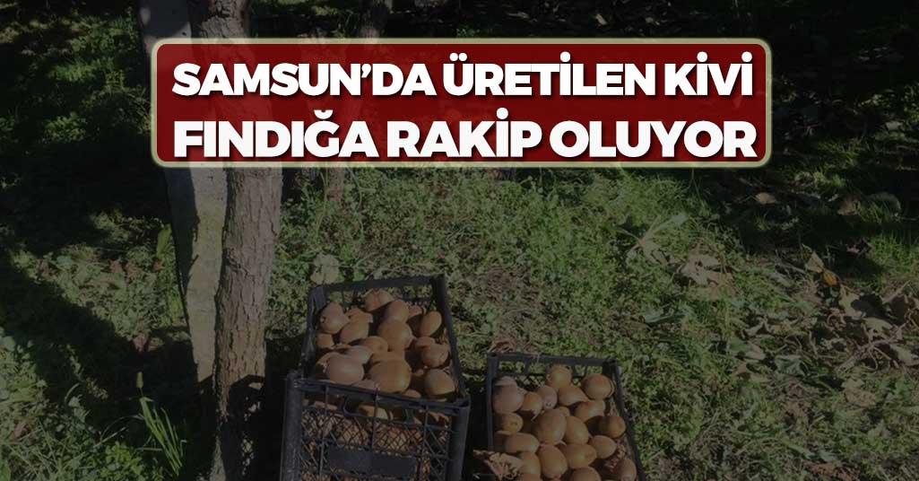 Samsun'da Üretilen Kivi Fındığa Rakip