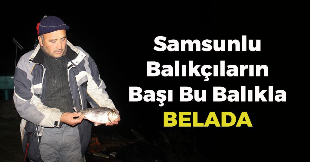 Samsunlu Balıkçıların Başı Bu Balıkla Belada