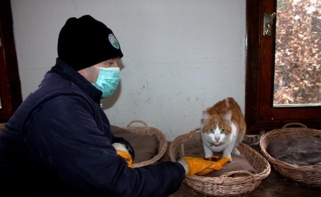 Kediler kışı dubleks villada geçiriyor