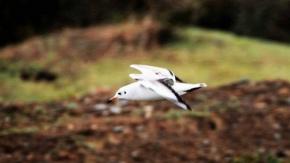 Samsun Kuş Cenneti fotoğrafları