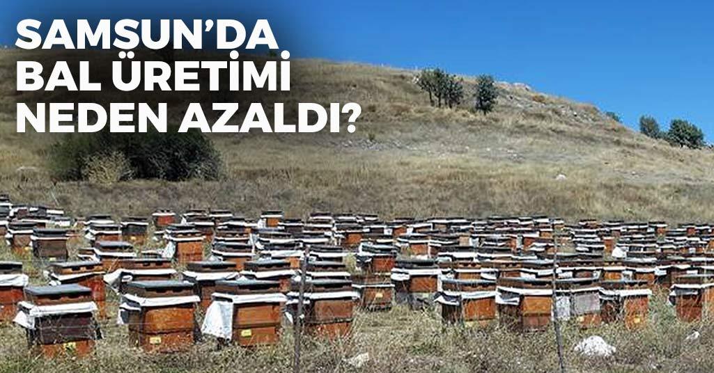 Samsun'da Bal Üretimi Neden Azaldı?