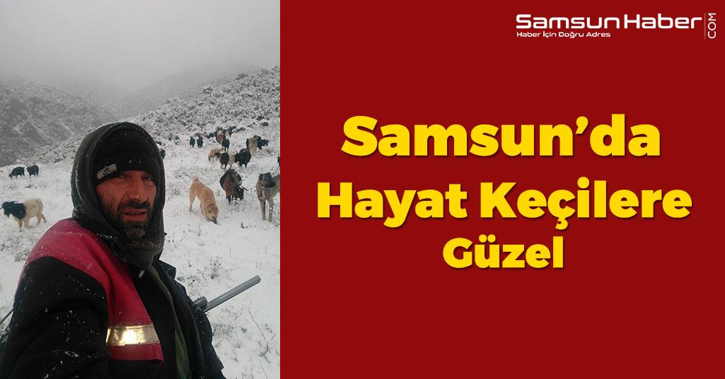 Samsun'da Keçilerin İnadı Engel Tanımadı