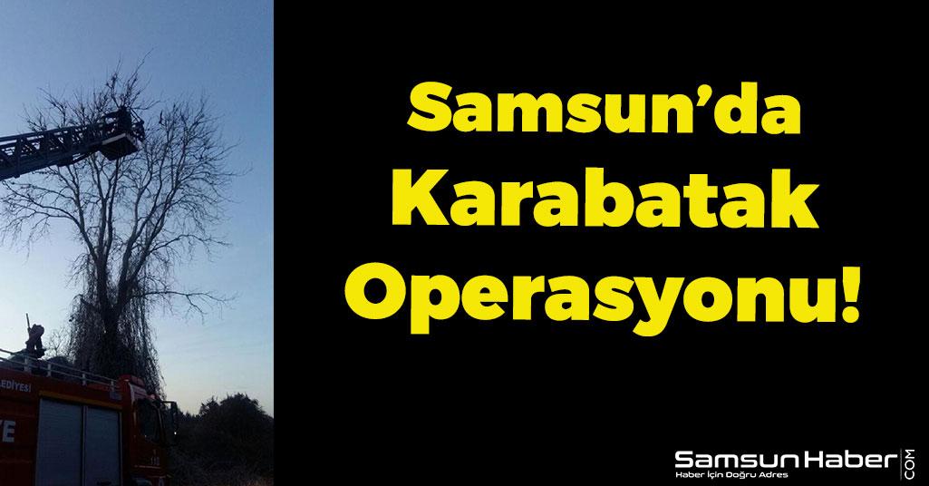 Samsun'da Karabatak Operasyonu