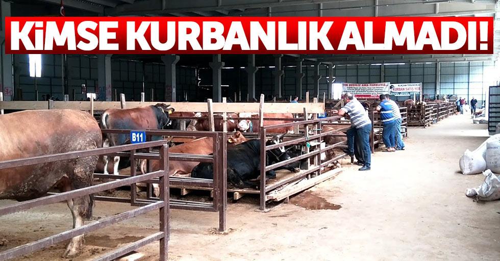Bafra'da kurbanlık hayvanlar satılmayı bekliyor