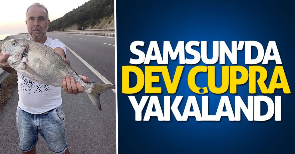 Samsun'da dev çupra balığı yakalandı