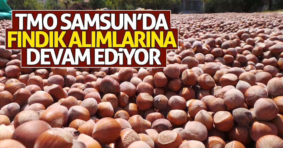 TMO Samsun'da fındık alımlarına devam ediyor