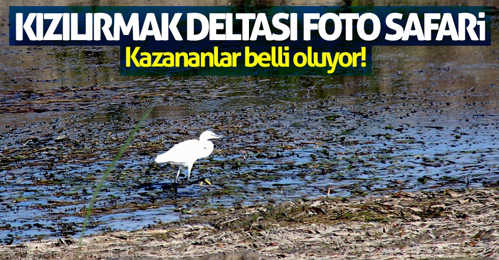 Kızılırmak Deltası Foto Safari'de kazananlar belli oluyor