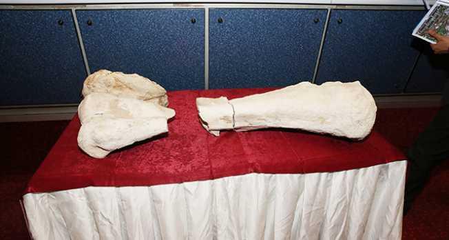Kayseri'de 10 milyon yaşında fosil bulundu