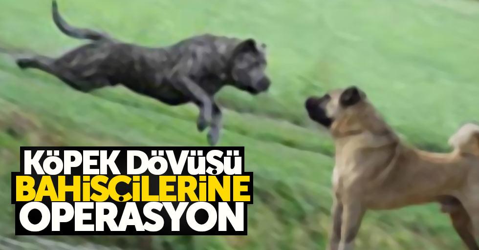 Köpek dövüşü bahisçilerine operasyon