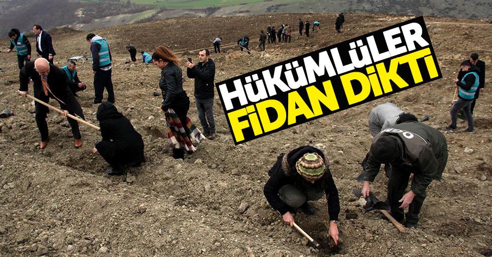 Samsun'da hükümlüler 2 bin 500 fidan dikti