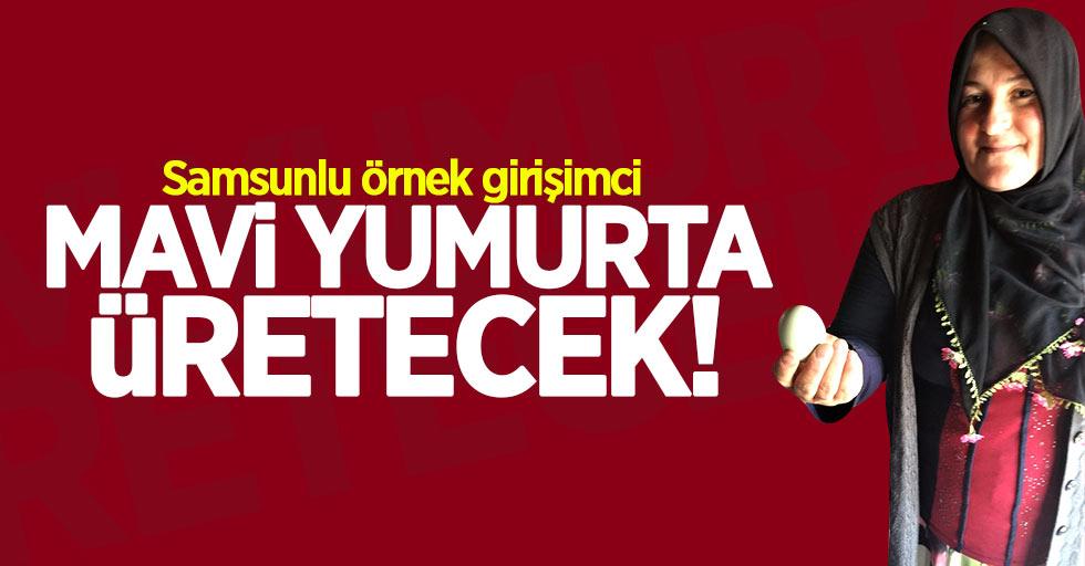 Samsun'da kadın girişimci mavi yumurta üretecek