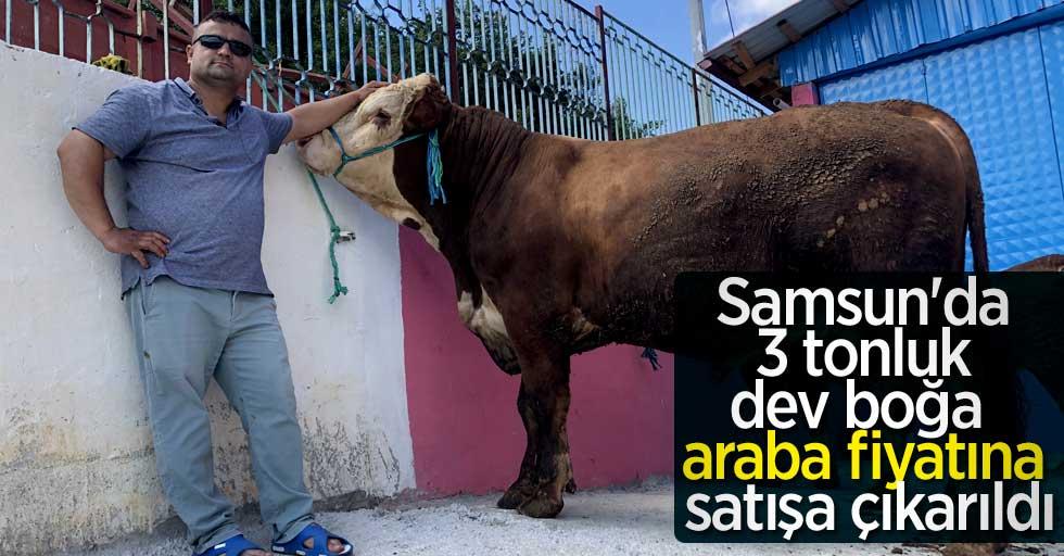 Samsun'da 3 tonluk dev boğa araba fiyatına satışa çıkarıldı