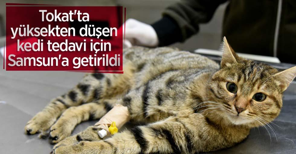 Tokat'ta yüksekten düşen kedi tedavi için Samsun'a getirildi