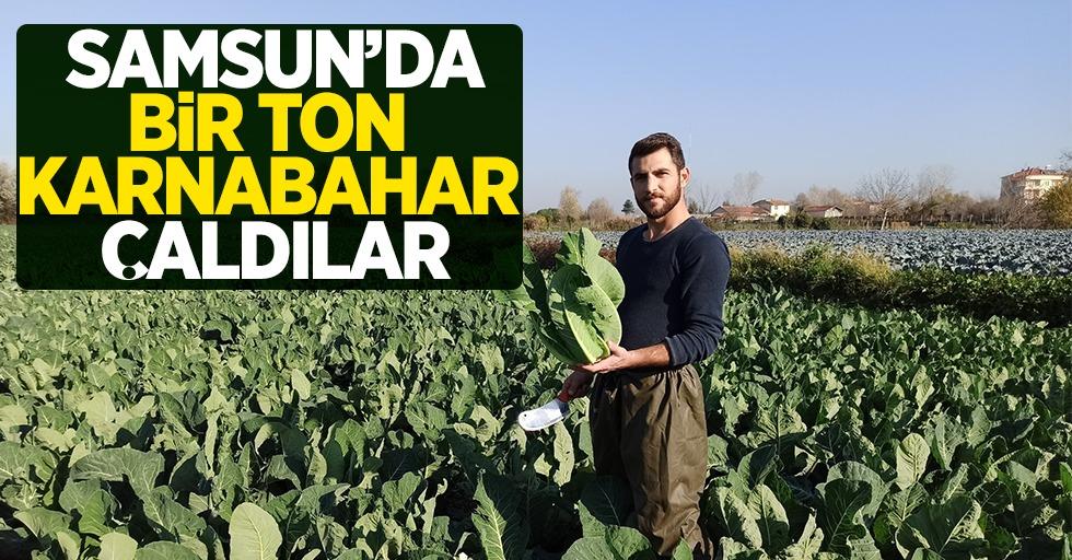 Samsun'da 1 ton karnabahar çaldılar