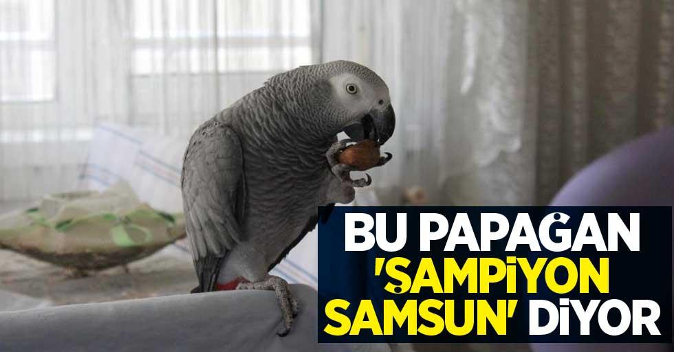 Bu papağan 'Şampiyon Samsun' diyor