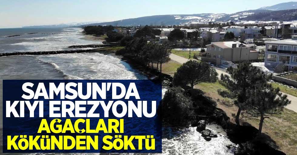 Samsun'da kıyı erezyonu ağaçları kökünden söktü