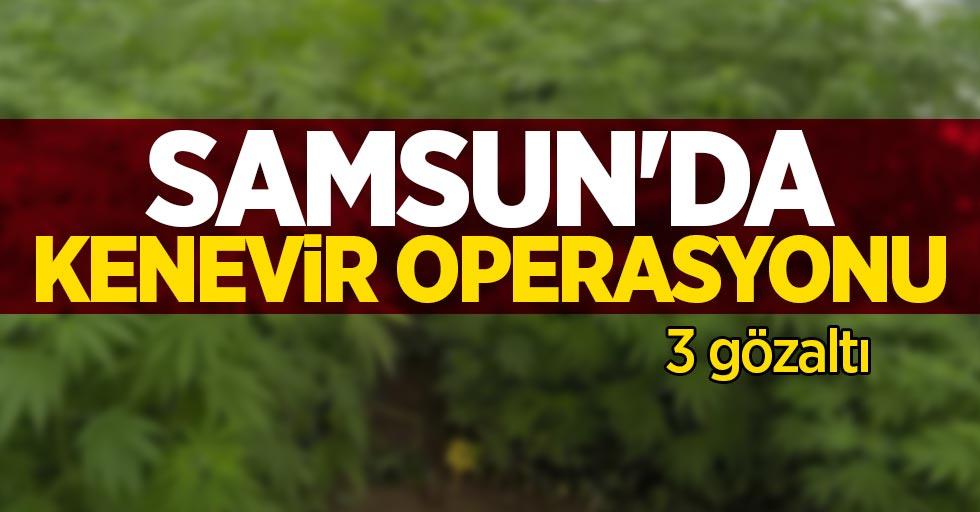 Samsun'da kenevir operasyonu: 3 gözaltı
