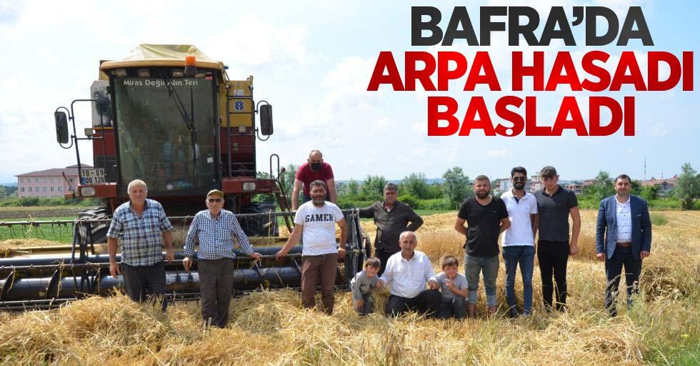 Bafra'da arpa hasadı başladı