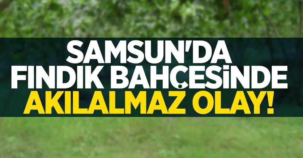Samsun'da fındık bahçesinde akılalmaz olay!
