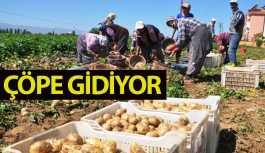 Pazarcılar Elde Kalan Patatesleri Çöpe Döküyor