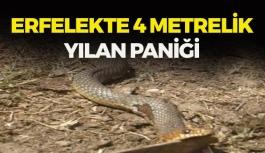 4 metrelik yılan eve girdi!