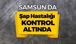 Samsun'da Şap Hastalığı Kontrol Altına Alındı