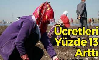 TÜİK Mevsimlik İşçi Ücretlerini Açıkladı