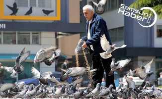 O hayvansever vatandaş her gün 10 kilo yem satın alıyor