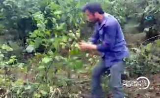 Fındık fiyatına üreticiden ağaç kesme tepkisi