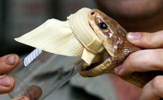 Yılanlara karşı panzehir sorunu yaşanıyor