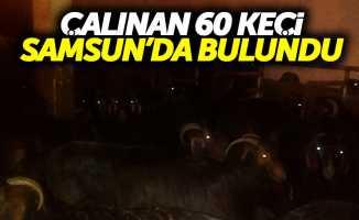 Çalınan 60 keçi Samsun'da bulundu