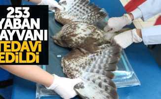 Samsun'da 1 yılda 253 yaban hayvanı tedavi edildi