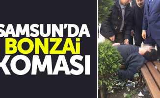 Samsun'da bonzai koması