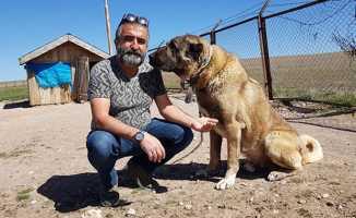 Kangallar Sivas'a turist çekiyor