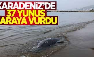 Karadeniz'de 37 yunus karaya vurdu