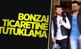 Samsun'da bonzai ticaretine tutuklama