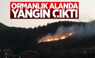 Tokat'ta ormanlık alanda yangın çıktı