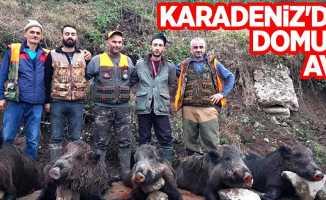 Karadeniz'de domuz avı