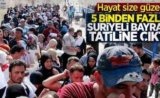 Suriyeliler bayram tatiline çıktı!