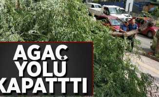 ağaç yolu kapattı