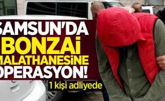 Samsun'da bonzai imalathanesine operasyon! 1 kişi adliyede