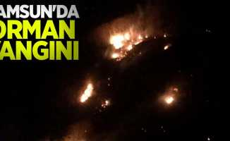 Samsun'da orman yangını
