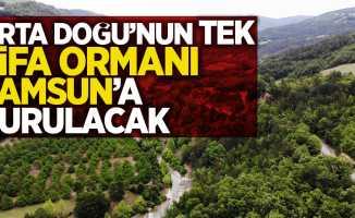 Orta Doğu'nun tek şifa ormanı Samsun'a kurulacak