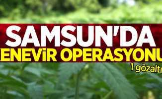 Samsun'da kenevir operasyonu: 1 gözaltı