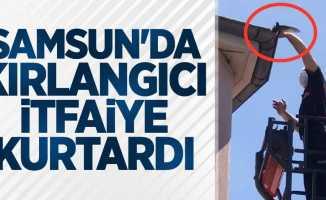 Samsun'da kırlangıcı itfaiye kurtardı
