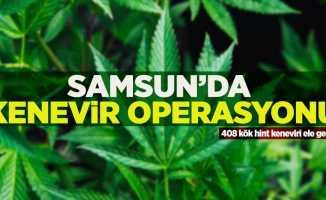 Samsun'da kenevir operasyonu: 1gözaltı