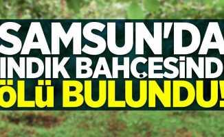 Samsun'da fındık bahçesinde ölü bulundu