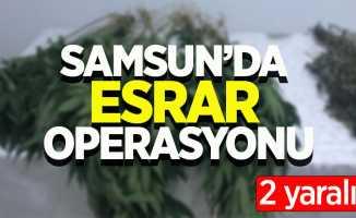 Samsun'da esrar operasyonunda 2 gözaltı